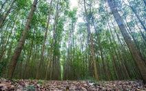 Quản lý rừng Bắc Trung Bộ bền vững, Việt Nam sẽ được 'rót' hơn 50 triệu USD