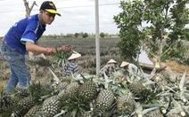 Saigon Co.op tiếp tục bao tiêu nông sản giá trị cao miền Tây