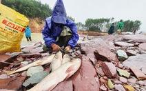 Liều mình săn cá 'khủng' dưới chân hồ Kẻ Gỗ