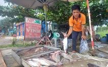 Cá tra 'đổ đống' bán bên lề đường, người nuôi đổ nợ