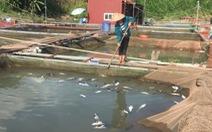 Thủy điện Hòa Bình xả lũ, dân trắng đêm cứu cá