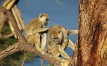 Nghiên cứu mới: Động vật đực sống lâu hơn nếu thân thiết nhiều con cái