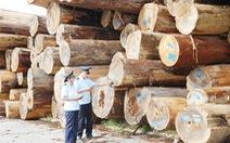 Hải quan siết nguồn gốc gỗ nguyên liệu bạch dương nhập khẩu
