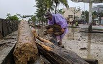 Củi tấp vào bờ biển Đà Nẵng sau bão, người dân tranh thủ nhặt