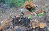 Đại biểu băn khoăn khi chuyển đổi đất rừng phòng hộ làm dự án