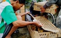 Vượt ngàn cây số mang gà, vịt, lợn giống về tặng dân vùng lũ