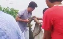Lại phát hiện cá sấu sổng chuồng tại Cà Mau