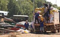 Nhộn nhịp nhập lúa Campuchia