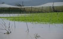 Xả lũ cấp tập trong đêm, hơn 350ha vùng rau Đà Lạt bị thiệt hại