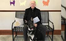 Ông Biden bị trẹo chân vì chơi với chó cưng Major