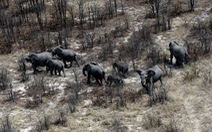 Botswana xin trả voi về cho Angola