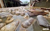 Nhanh chóng khôi phục chăn nuôi gia cầm sau lũ để tết không thiếu thực phẩm