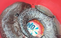 Ăn cá chình kho nước dừa, 4 người bị ngộ độc nhập viện