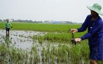 Mưa một trận bơm 5 ngày mới rút hết nước, nông dân 'đứng ngồi không yên'