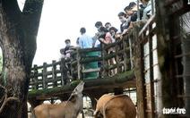 Thảo Cầm Viên Sài Gòn tăng giá vé để chăm lo tốt hơn cho vườn thú
