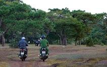 Thủ tướng yêu cầu đánh giá tác động chuyển rừng thông Đak Đoa thành sân golf