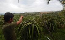 Trại heo ô nhiễm trên đồi cao làm 'nóng' nghị trường Bình Thuận