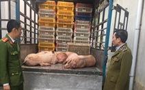 Đưa thịt heo, heo sống bị bệnh dịch tả heo châu Phi đi tiêu thụ bị phạt 17,5 triệu đồng