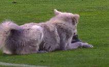 Hài hước khoảnh khắc trận đấu gián đoạn vì... chú chó chạy vào sân và gặm giày cầu thủ