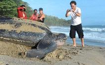 Tìm thấy một tổ rùa da quý hiếm tại Ecuador