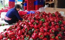 Đổ bỏ nông sản vì 'bí' đường xuất khẩu vì COVID-19