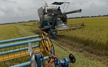 Thái Lan có thể mất ngôi nước xuất khẩu gạo lớn thứ 2 thế giới
