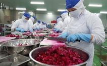 Giá 'giải cứu' thanh long của siêu thị: 7.000 đồng/kg, nông dân được 1.000 đồng