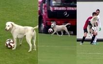 Video: Chú chó 'Pelezinho' lao vào sân, cướp bóng của cầu thủ