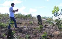 Đốt cháy, chặt hàng trăm cây thông 20 năm tuổi rồi dựng bảng mua bán đất
