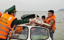 Chủ nhà hàng hải sản mua rùa quý nặng 30kg đem thả về biển