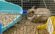 Chuyện nhà thỏ
