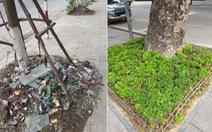 Nên trồng hoa, thảm cỏ ở mỗi gốc cây
