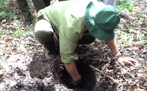 Nguy cơ cháy rừng ở Vườn quốc gia U Minh Hạ rất lớn