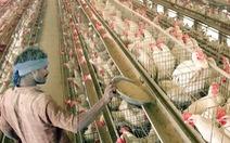 Chủ trại gà mất trắng 800.000 USD vì tin giả COVID-19