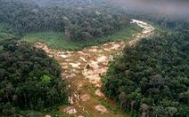 Tương lai màu xám của 'lá phổi xanh' Amazon