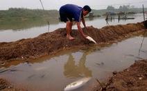 Cá chết hàng loạt trên sông Chu