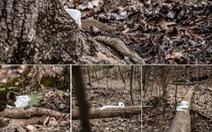 Nhiếp ảnh gia Mỹ 'gây sốt' vì bộ ảnh giấy vệ sinh 'sắp tuyệt chủng'