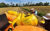 Việt Nam giữ sản lượng 22 triệu tấn gạo