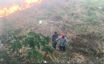 Đã vận động đốt 'núi cỏ' cạnh khu dân cư