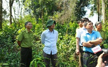 Thanh tra đề nghị kỷ luật tập thể, cá nhân đốn rừng trồng dược liệu
