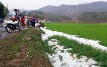 Mưa đá dày đặc, phủ trắng bờ ruộng lúa tại Điện Biên
