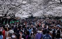 Bất chấp khuyến cáo, hàng ngàn người Nhật đổ xô đi ngắm hoa anh đào
