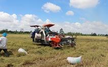 Hiệp hội Lương thực Việt Nam kiến nghị Chính phủ cho xuất khẩu gạo lại