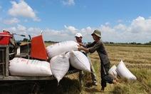 Đề xuất cho xuất khẩu gạo lại bình thường, không có hạn ngạch