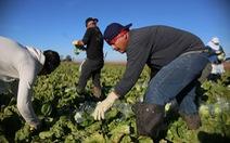 Châu Âu khan hiếm lao động nước ngoài làm việc theo thời vụ