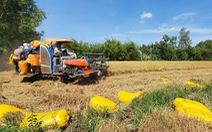 Nông dân sẽ bị 'đè' giá lúa