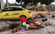 Mang cả taxi đi chở 22 con chó bắt trộm được