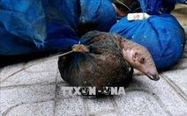 Kêu gọi chấm dứt buôn bán và tiêu thụ động vật hoang dã