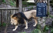 Đóng cửa vì COVID-19, sở thú London chật vật chăm sóc 18.000 động vật