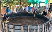Phá điểm đá gà ăn tiền trên đảo ở Nha Trang